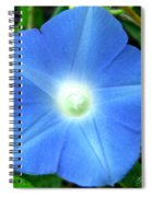 Five Point Star Morning Glory  Spiral Notebook