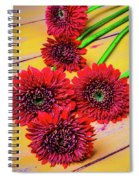 Five Red Dasies Spiral Notebook