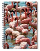 Flamboyance Of Flamingos Spiral Notebook