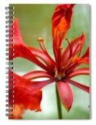Flamboyant Beauty Spiral Notebook