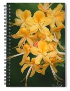Flame Azalea  Spiral Notebook