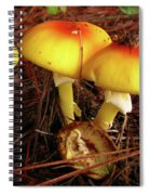 Flame Pluteus Mushroom  Spiral Notebook