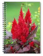 Flames Of Celosia Spiral Notebook