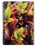 Flames Of Delight Spiral Notebook