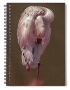 Flamingo -2 Spiral Notebook