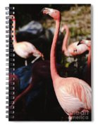 Flamingo 3 Spiral Notebook