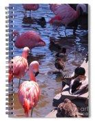 Flamingo Family  Spiral Notebook