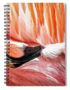Flamingo Feather Spiral Notebook