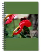 Flamingo Flower Spiral Notebook