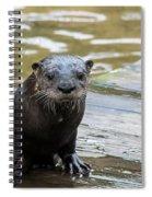 Flamingo Gardens - Curious Otter Spiral Notebook