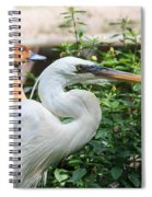Flamingo Gardens - Great Egret Profile Spiral Notebook