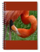 Flamingo Spiral Notebook
