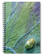 Flamingo Tongue Spiral Notebook