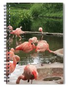 Flamingoes Looking Oh So Pretty  Spiral Notebook