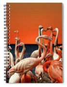 Flamingos At The Cape Spiral Notebook