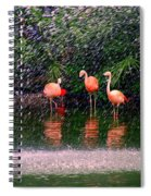 Flamingos II Spiral Notebook