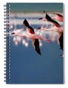 Flamingos In Flight-signed Spiral Notebook