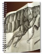 Flea From Robert Hookes Micrographia Spiral Notebook