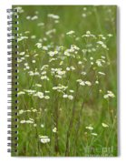 Fleabane In The Meadow Spiral Notebook