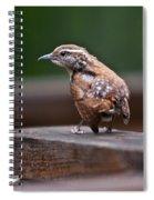Fledgling Wren 1 Spiral Notebook