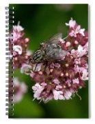 Flesh Fly Spiral Notebook