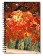 Flickering Sunlight Spiral Notebook