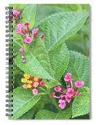 Flight Of The Bumble Bee Spiral Notebook