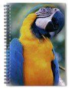 Flirtacious Macaw Spiral Notebook