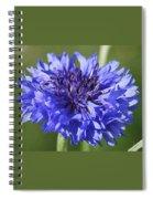 Flirtatious Spiral Notebook