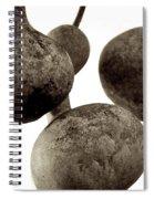 Floating Gourds Spiral Notebook