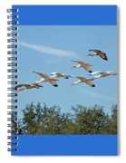 Flock Of White Ibises Spiral Notebook