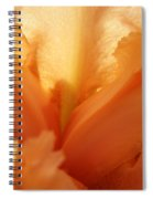 Floral Art Orange Iris Flower Sunlit Baslee Troutman Spiral Notebook