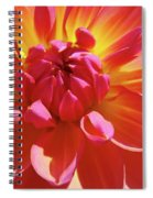 Floral Art Prints Orange Pink Dahlia Flower Baslee Troutman Spiral Notebook