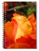 Floral Art Prints Orange Rhodies Rhododendrons Baslee Troutman Spiral Notebook