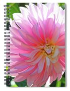 Floral Art Prints Pink Dahlias Sunlit Baslee Troutman Spiral Notebook