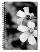 Floral Black And White Spiral Notebook