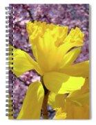 Floral Fine Art Daffodils Art Prints Spring Flowers Sunlit Baslee Troutman Spiral Notebook