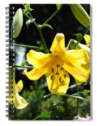Floral Lilies Art Yellow Lily Flowers Giclee Baslee Troutman Spiral Notebook