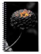 Floral October Zinnia End Of Season Sc 01 Spiral Notebook