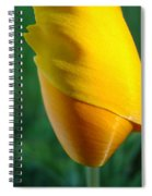 Floral Poppy Flower Poppies Art Prints Giclee Baslee Troutman Spiral Notebook
