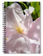 Floral Rhdodendron Flower Art Print Pink Sunlit Rhodies Baslee Spiral Notebook