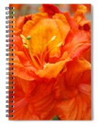 Floral Rhodies Art Prints Orange Rhododendrons Canvas Art Baslee Troutman Spiral Notebook