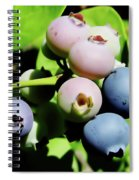 Florida - Blueberries - On The Bush Spiral Notebook