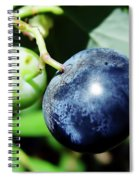 Florida - Blueberry Spiral Notebook