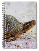 Florida Box Turtle Spiral Notebook