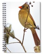 Florida Cardinal Spiral Notebook