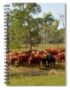 Florida Cracker Cows #1 Spiral Notebook