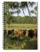 Florida Cracker Cows #3 Spiral Notebook