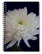 Florida Flowers - White Gerbera Ready For Full Bloom Spiral Notebook