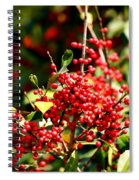 Florida Holly Berry's  Spiral Notebook